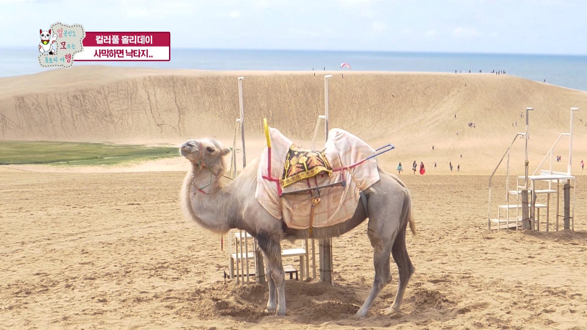 6화 DAY3: 돗토리 해안 사구 -> 모래 미술관 -> 돗토리현 이와미군(날치잡이)